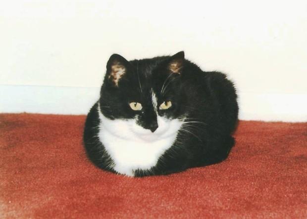 puss 001