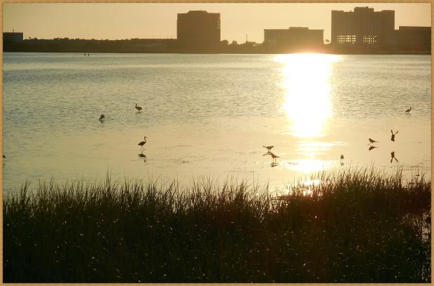 dusk birds