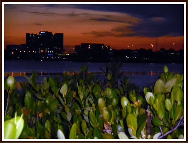 Mangroves as light falls, Old Tampa Bay