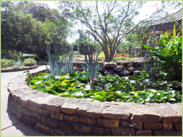 Lily pond in Mercer Arboretum