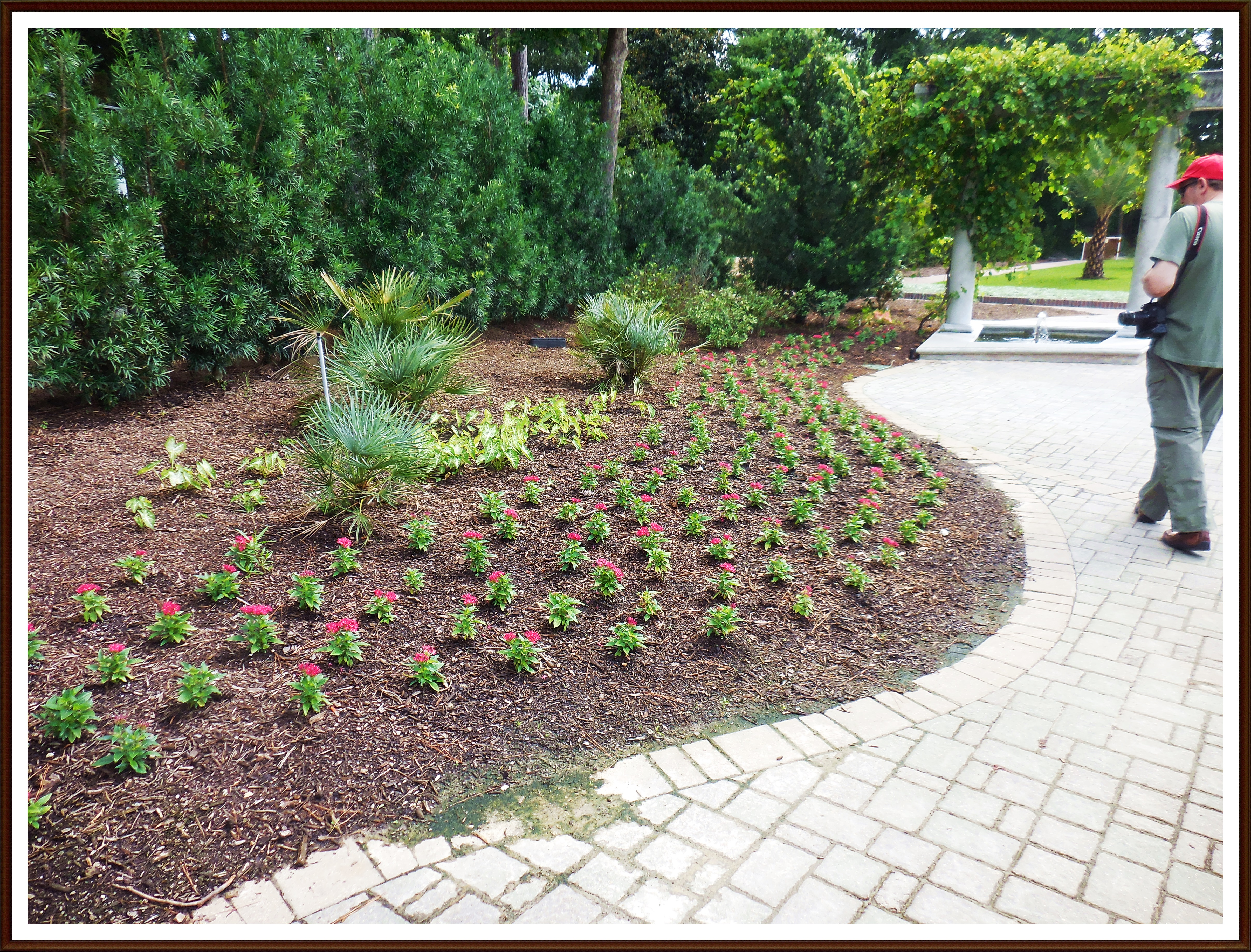new beds of flowers