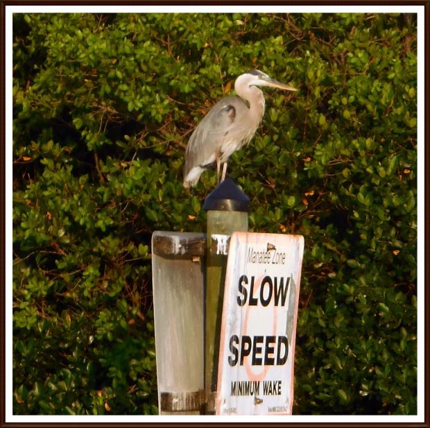 slowspeed2