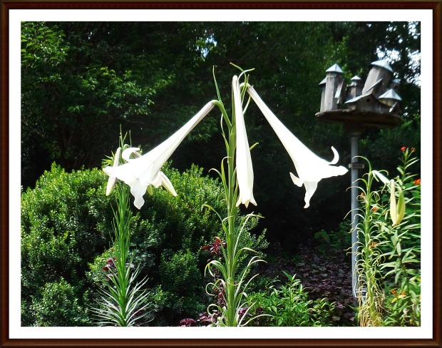 Three white trumpets