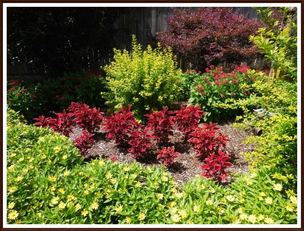 Burgundy Coleanthus