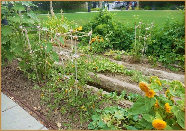 Pioneer planting methods