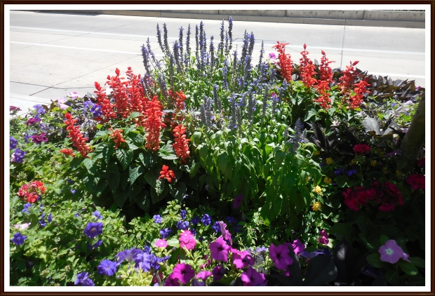 Red and Blue flowerbed
