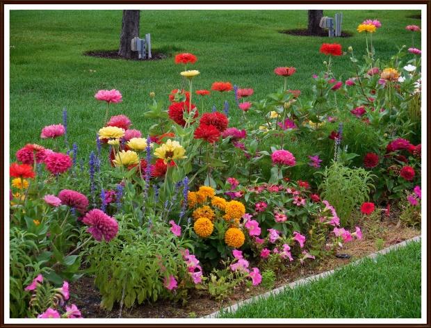Multi-colored blossoms in park