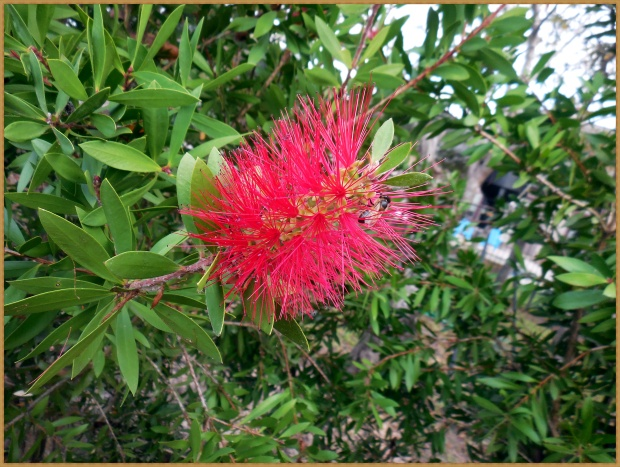 bottle-brush