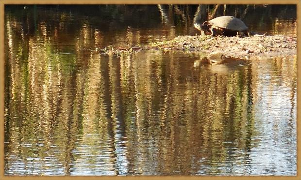 cold-turtle