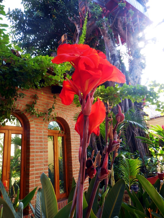 red-blossom